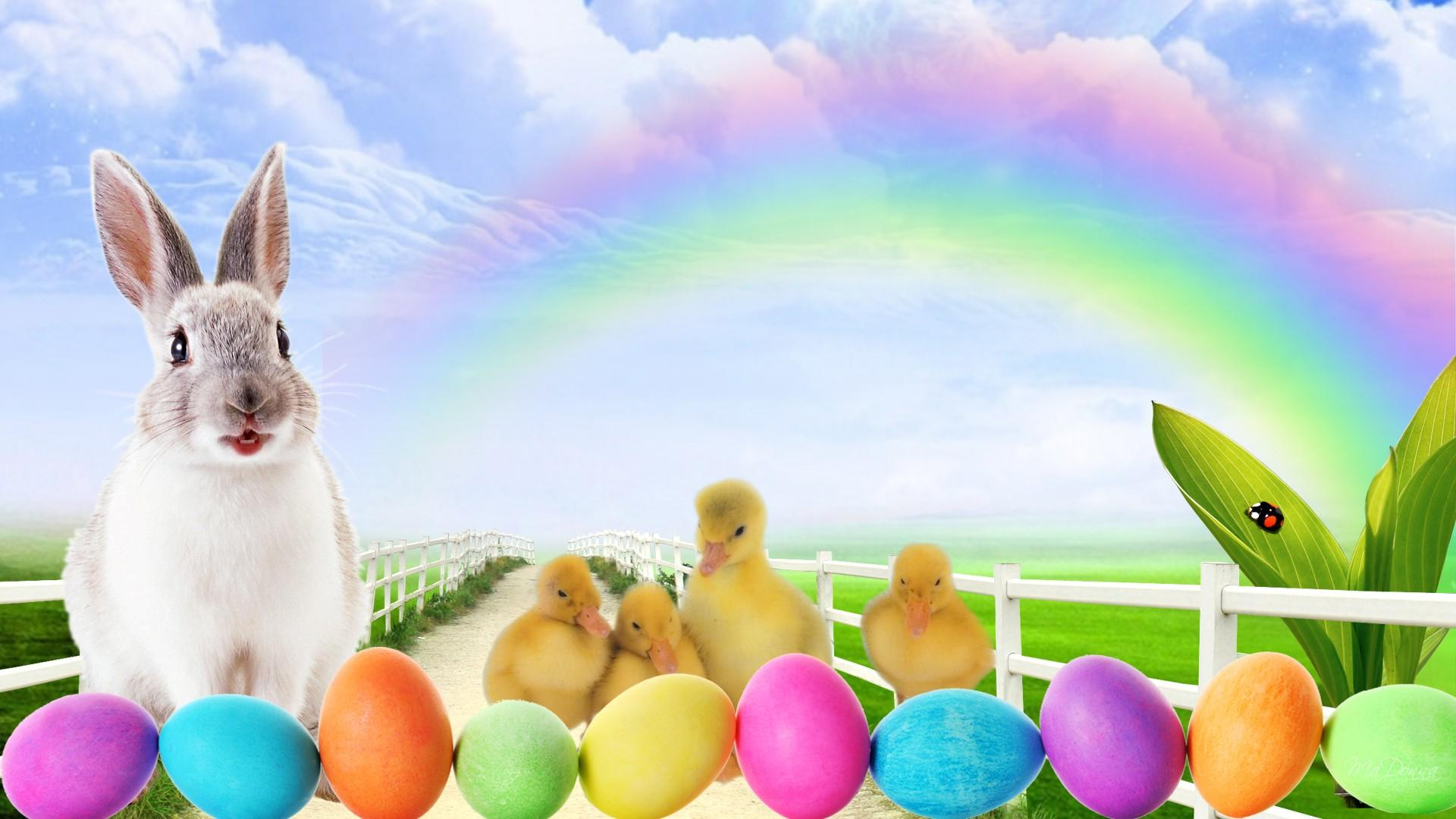 Easter Bunny Wallpaper Backgrounds